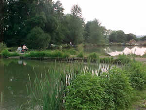 Willinghurst Fishery